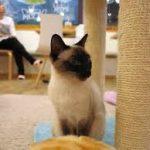 Кафе «Мурка» — уникальное заведение для людей и котиков